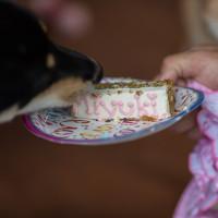 Miyuki eating her pawty cake