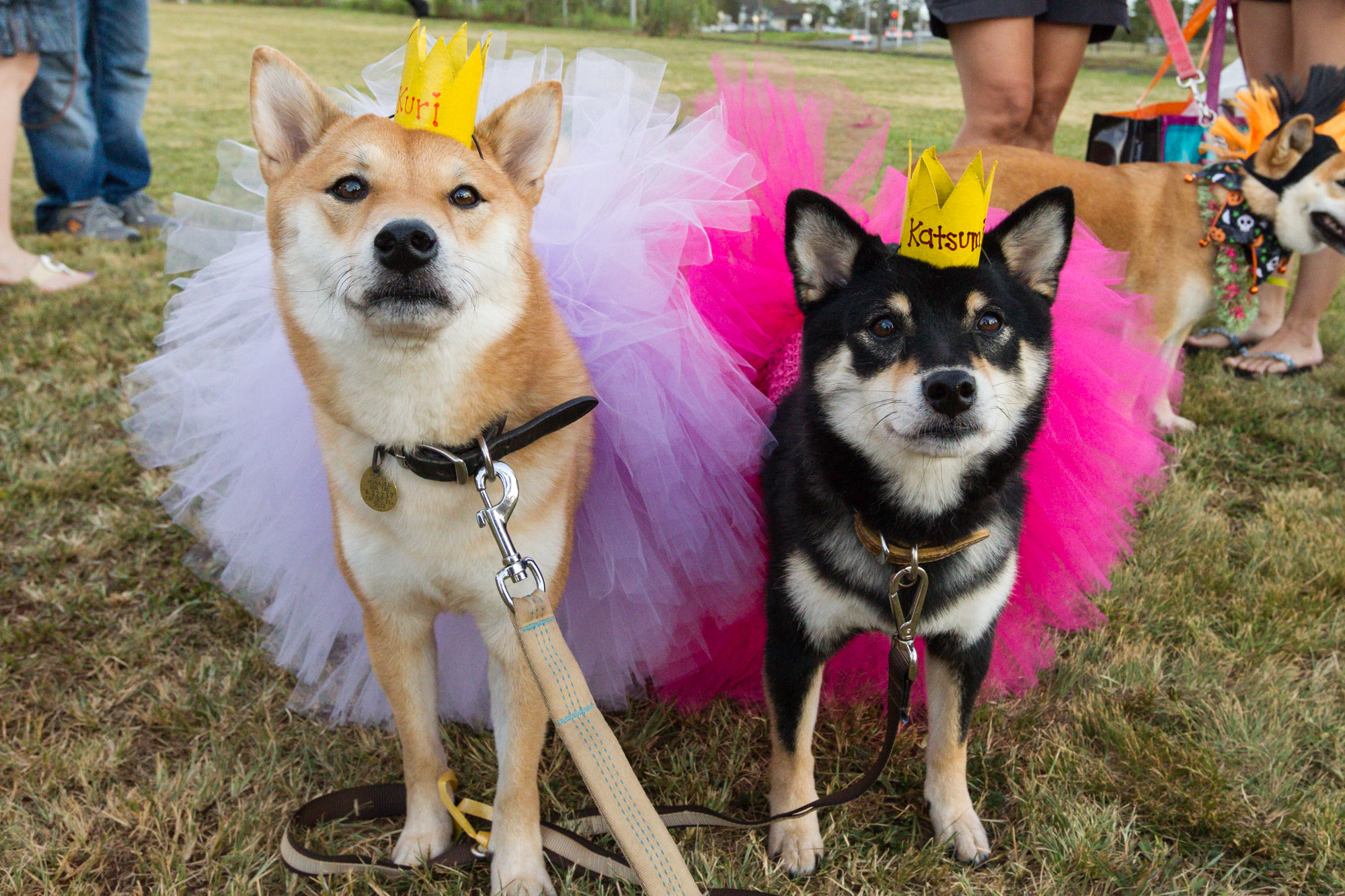 DIY easy Doggie Costume: Toilet Paper roll Doggie Crowns | Hawaii ...