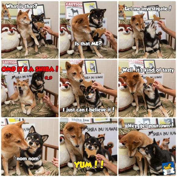 Shiba Inu biscuit collage