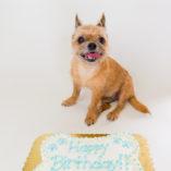classic-pawty-cake