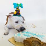 pawty-cake-kobe