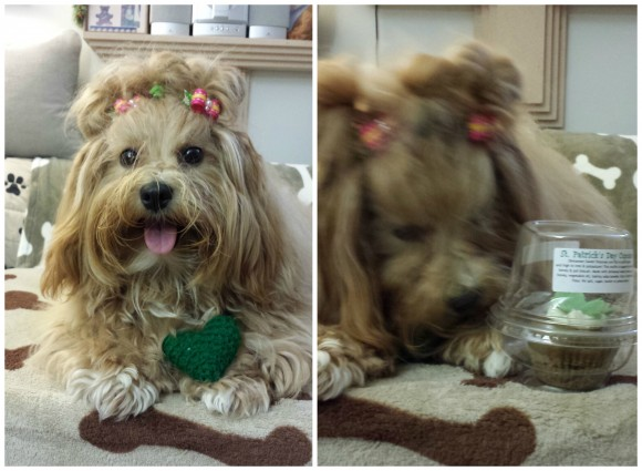 Karen sent us these photos of Emi posing with her heart crochet collar to benefit Shiba Inu Hawaii and a St. Patrick's Day cupcake