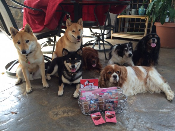 Our family dogs posing with their Valentine's Day Gift Basket from Karen & Emi