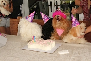 The birthday girl licks her lips and eagerly awaits her cake!