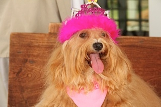 Emi's 1st Birthday Pawty: for Karen Kanetoku!