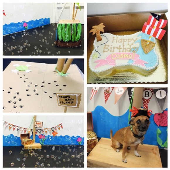 Pirate party at poi dogs daycare