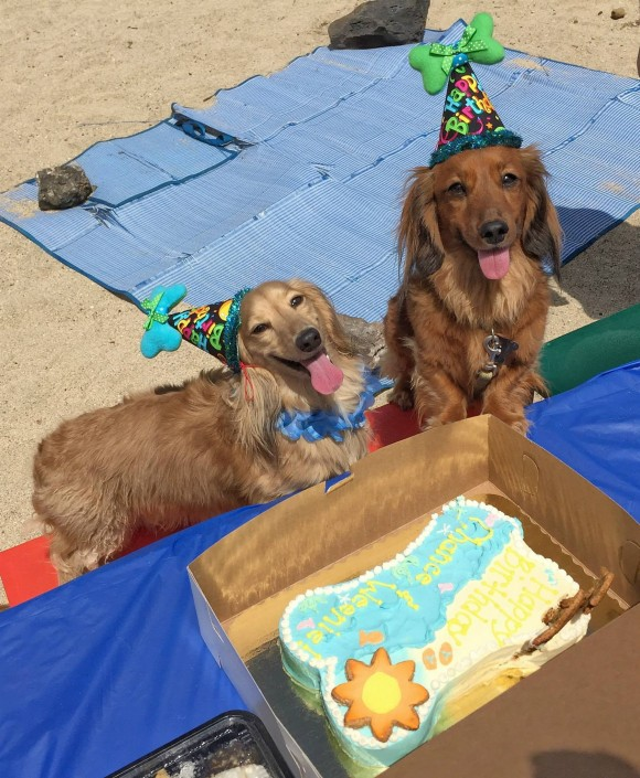 Birthday dogs - chance and weenie