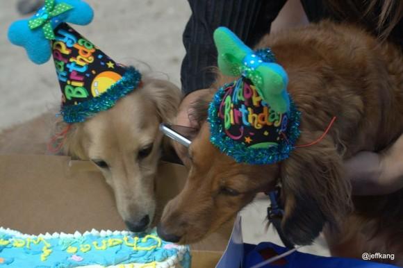 Dig in, birthday boys!