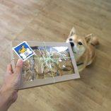 Biscuit Multipack - Kuri