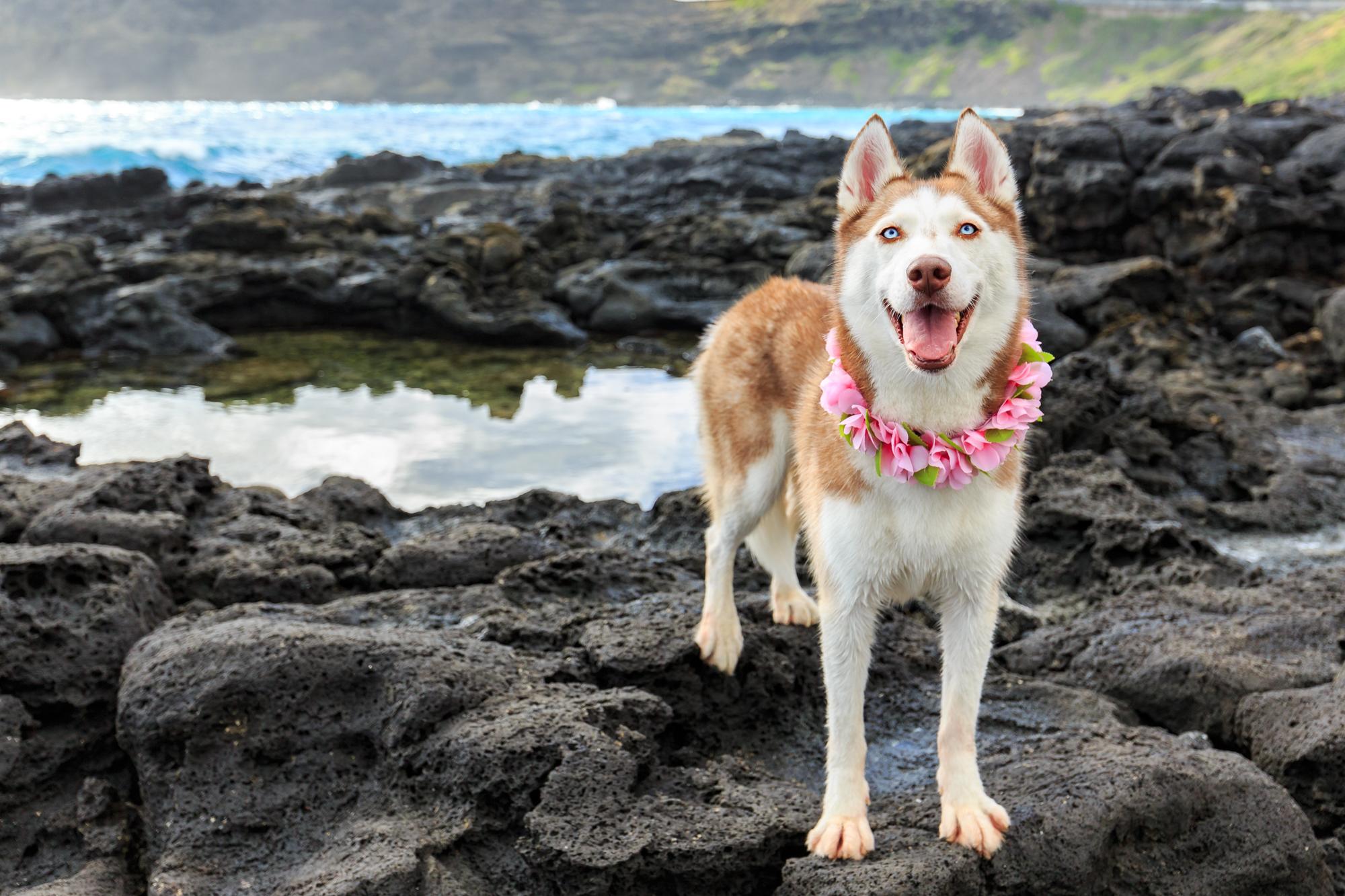 Hawaii Pet Photographer
